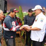 Program OD-SK Dimulai, Gubernur Olly Ikut Menanam Jagung Dan Padi