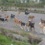 Rabies Intai Warga Sangihe