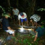 Diduga Jatuh Dari Pohon Pala, Anselmus Maili Ditemukan Tewas Di Kebun