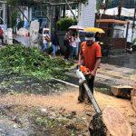 Antisipasi Pohon Tumbang, Dinas LH Manado Siagakan Tim Satgas Pemeliharaan Pohon