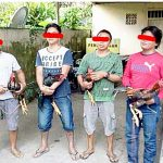Diamankan Polsek Malalayang, 5 Pria Diduga Berjudi Sabung Ayam